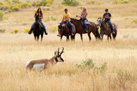 Pronghorn and Riders on Boundary Rd., Mammoth