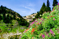 Lillian Pass Trail. Hillside Flowers 2